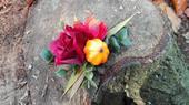 Sponka/brož s růží vedle dýně,