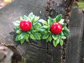 červené bobulky na keři,