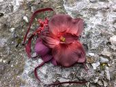 náramek s orchidejí,