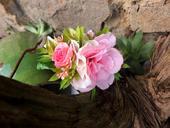 přírodní růž,