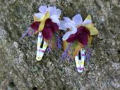 tmavě fialové květinové sponečky,