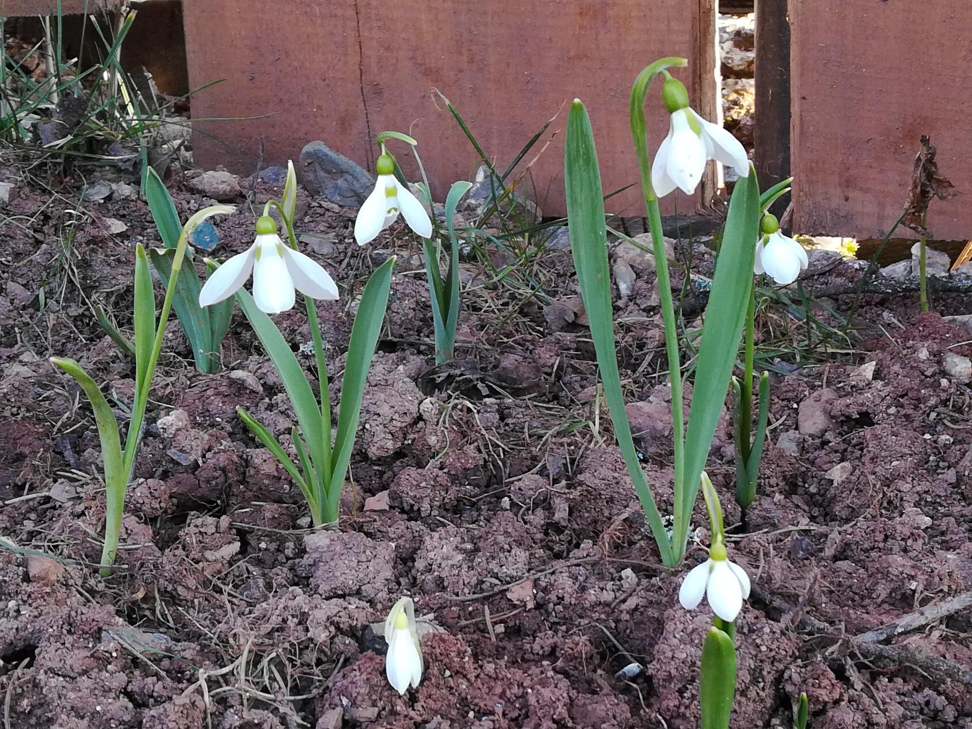 #som doma - Záhrada sa už pomaly zobúdza.