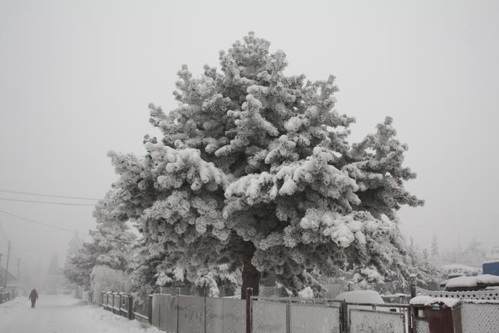 Paní Zima 2013 - Obrázek č. 1