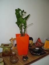 nová Orchidejka