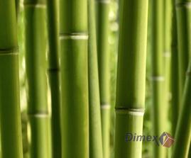 bambus... všechno jsou to vliesové fototapety...