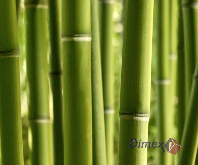Líbí se nám... Všehochuť - bambus... všechno jsou to vliesové fototapety...