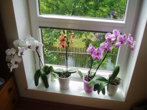 kvetoucí krasavice