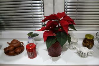 Bez Vánoční hvězdy to nejde :-)
