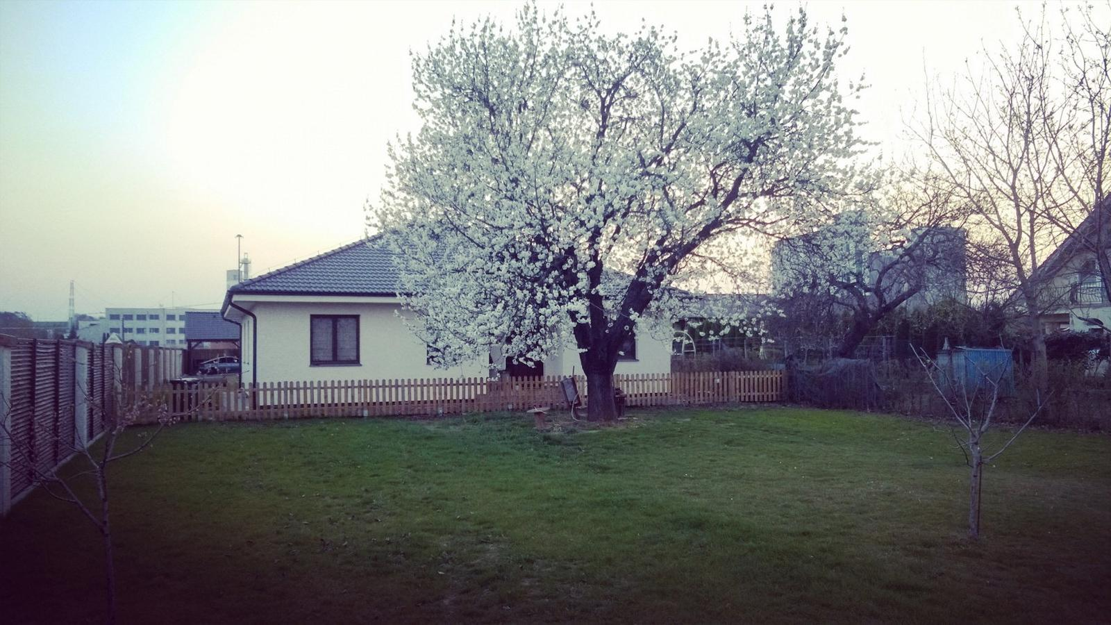 Náš domov :) - Tuto asi 100ročnu nádheru mame pred domom 😉