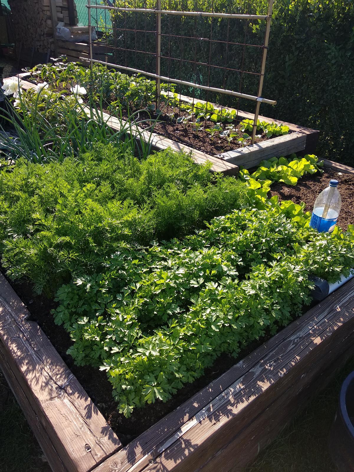 Náš domov :) - Zeleninová záhradka ❤️