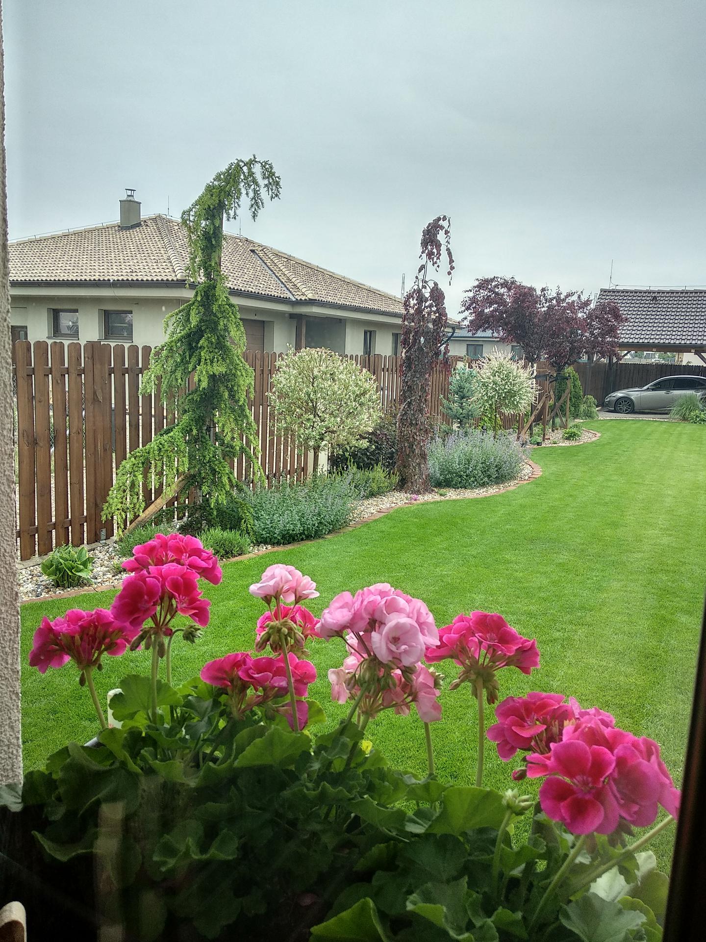 Konečne prší, kvetinky a stromčeky sa tešia 🙏 - Obrázok č. 1