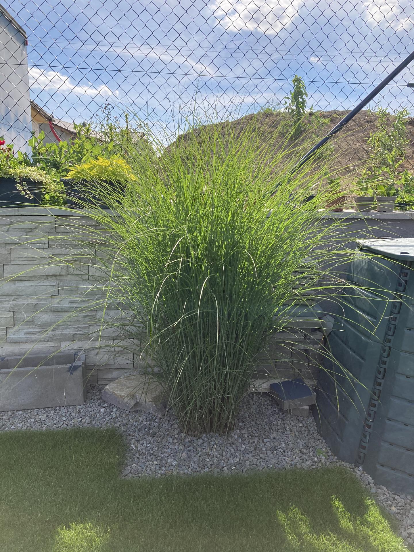 Naše 3 roky stará zahrada 🤩 - Obrázek č. 11