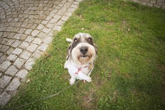 Naše psí slečna. Zvládla s náma celou svatbu a byla úžasně hodná.