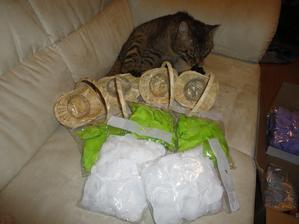 košíčky pro družičky a plátky růží - kocour má dohled :-)