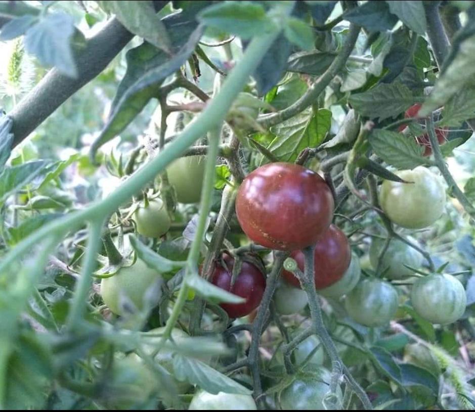 Black cherry - Obrázok č. 1