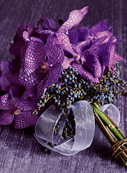 16.3.2007 - Fialkové orchideje jsem ještě neviděla:)