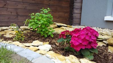 Krásně kvete, jediné alespoň trochu stinné místo na zahradě, jinak nám téměr po celý den pere všude sluníčko