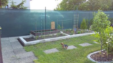 Konečně jsem si rozšířila zahrádku a zasázela cherry rajčátka, cuketu, dýni a okurku (ano, všechno se tam vešlo!) + vzadu kompost
