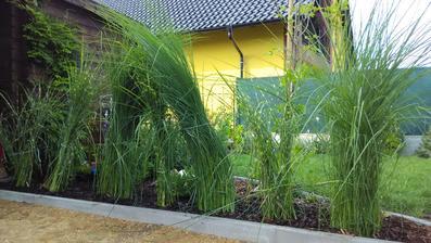 Od maminky jsem si dovezla trávy, budou dělat příjemnou clonu k bazénu