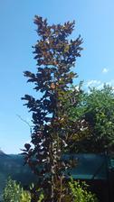 Můj jediný vysoký strom