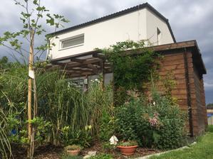 Krásně nám začíná zarůstat zahradní domek i pergola