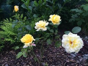 Letos samý květ a vůně