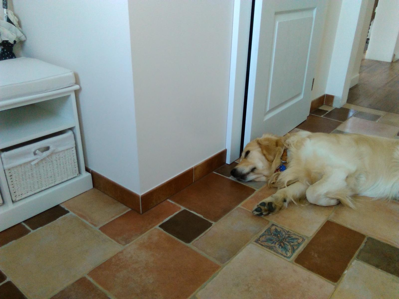 Náš nový domov-už bývame :-) - takto si lebedi celý deň
