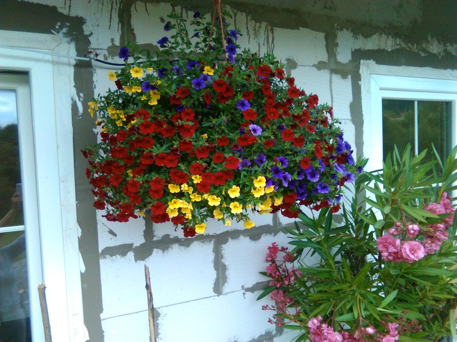 Naša vidiecka záhrada pri novom domčeku. - vytešujem sa z nej ,takú krásnu minipetunku som v živote nemala.