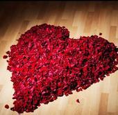 Lupene ruží rôzne farby - 100 ks,