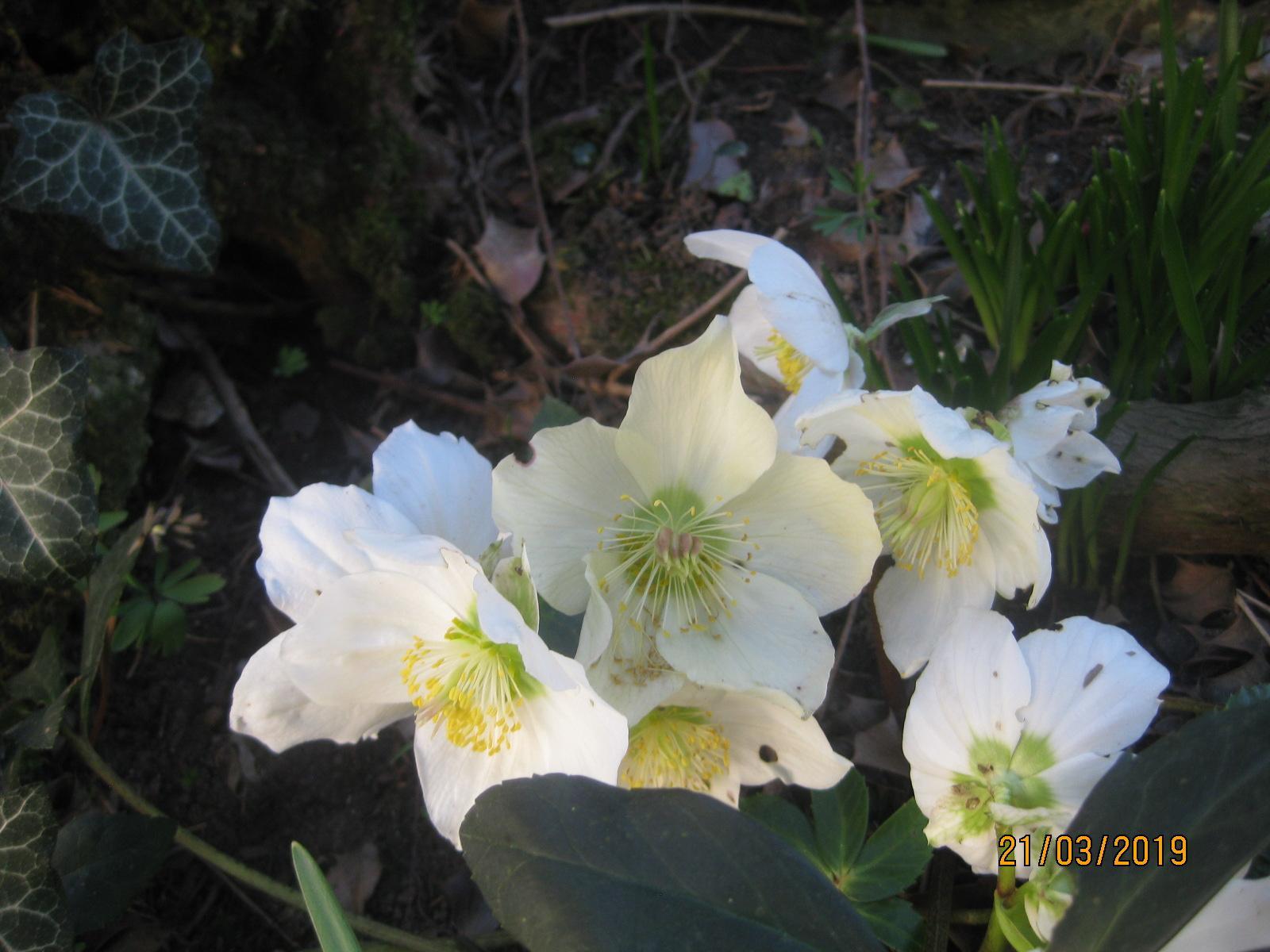 Už tu máme jar!... - Obrázok č. 3