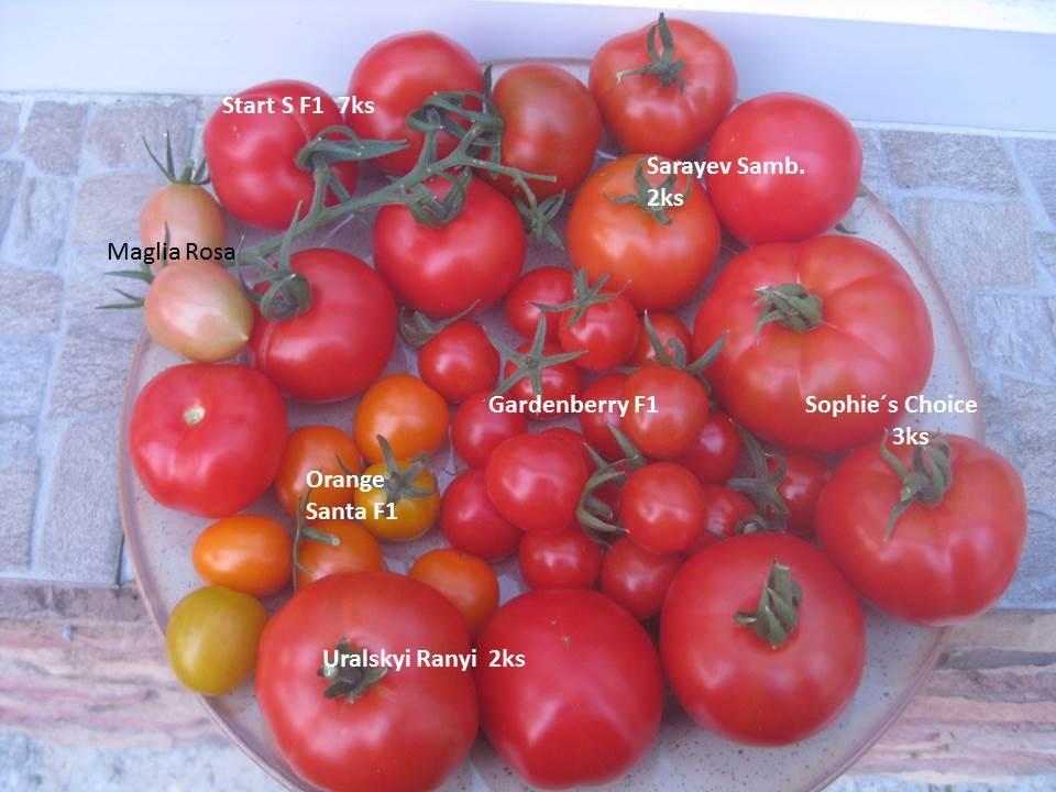 Včerajšie rajčinkovanie- oberačka, pikírovačka... - Obrázok č. 1