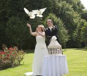 Nabízím bílé poštovní holubice na Váš velký den,