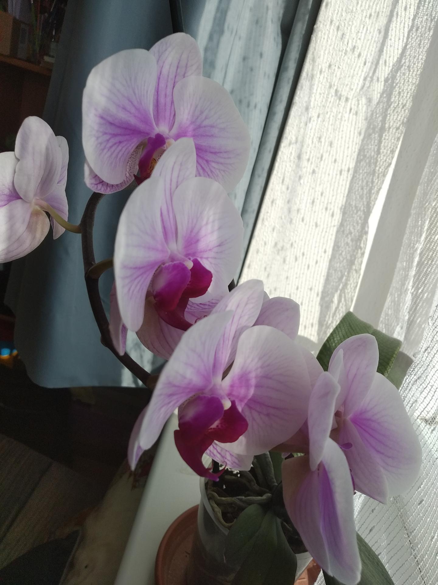 Datla a Orchidea - Obrázok č. 2