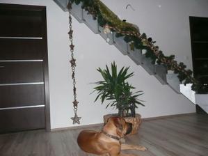 vianocna vyzdoba na schodoch