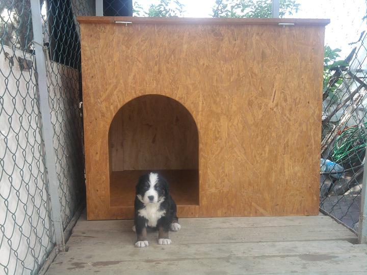 Moja práca- nábytok na mieru - buda pre psa do exterieru