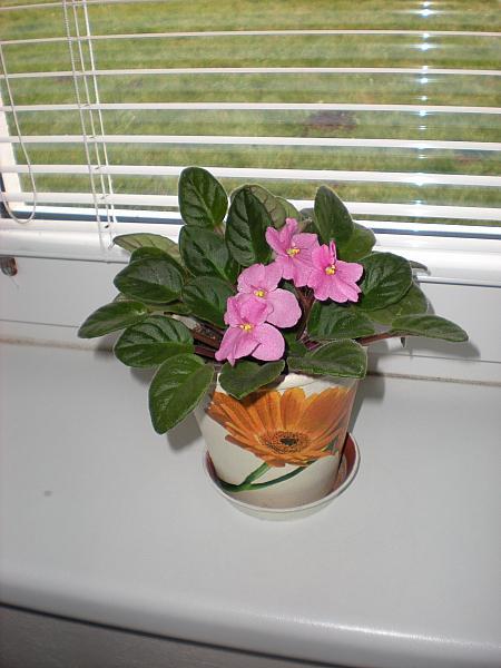Moje krásne kvetinky - Fialka