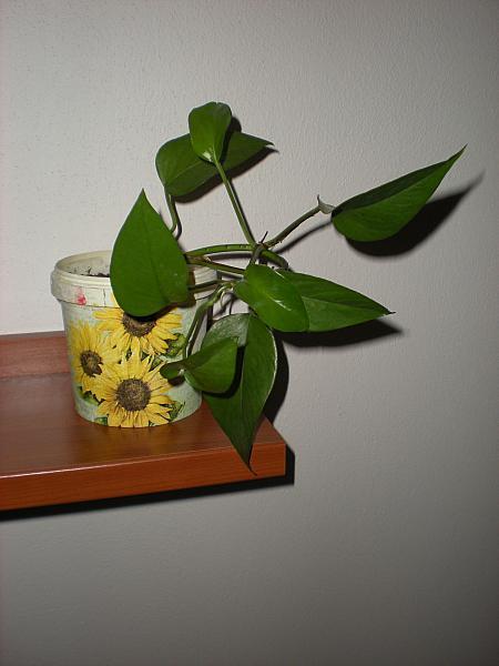 Moje krásne kvetinky - Ťahavý Jano (10/2010)