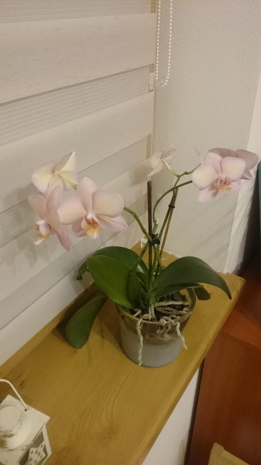 Moje krásne kvetinky - Orchidea - 2/2018