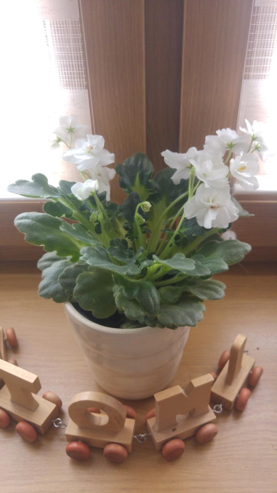 Moje krásne kvetinky - (4/2018)
