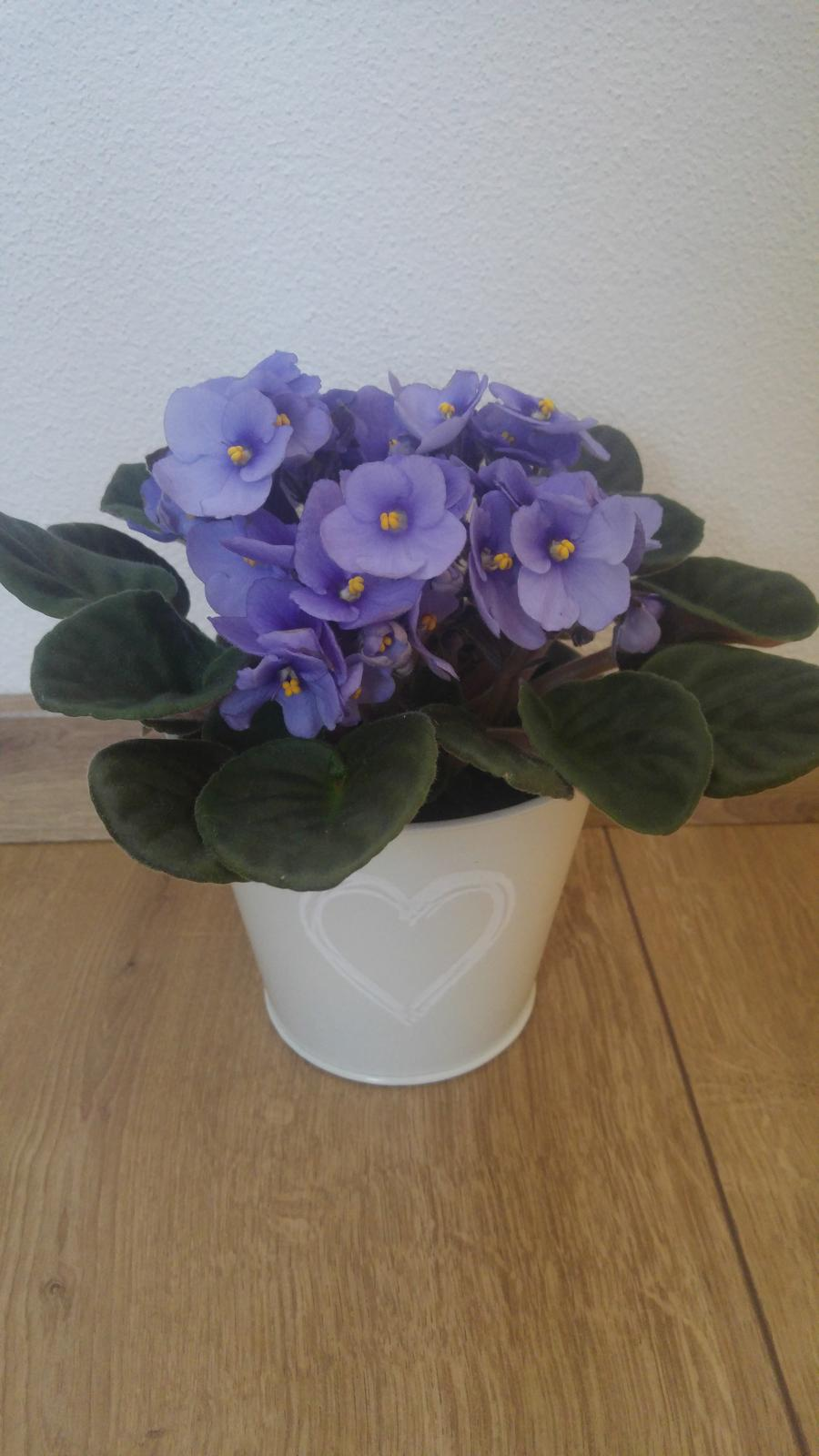 Moje krásne kvetinky - Fialka (kupena 4/2018)