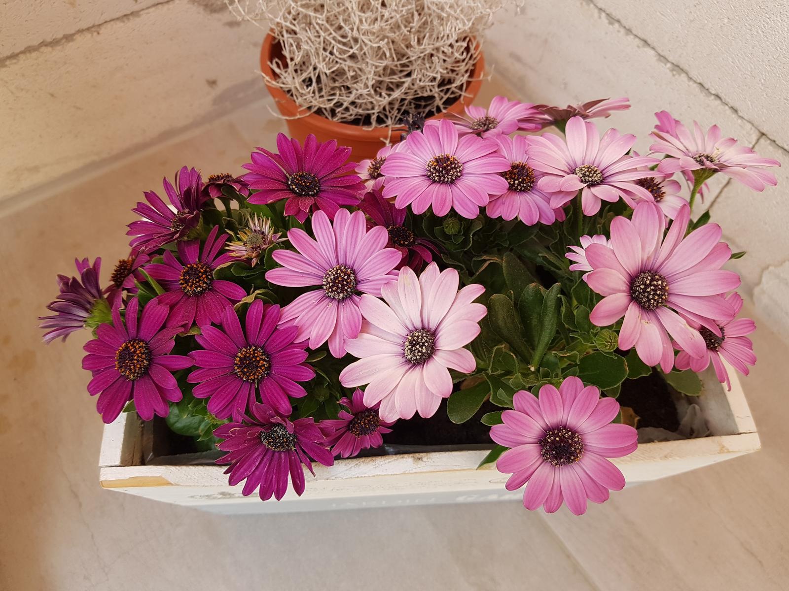 Moje krásne kvetinky - Obrázok č. 107