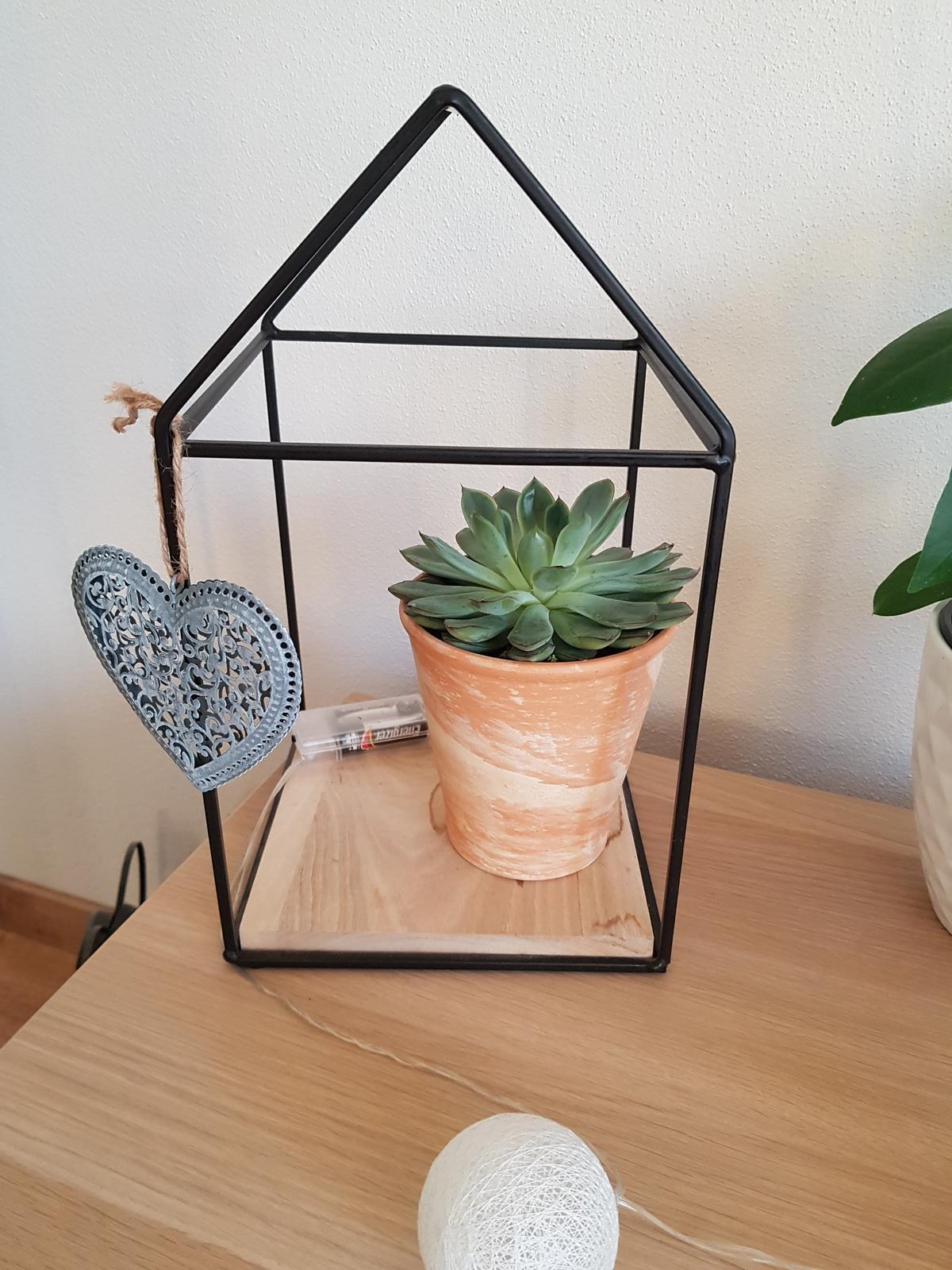 Moje krásne kvetinky - 2/2019 - echeveria