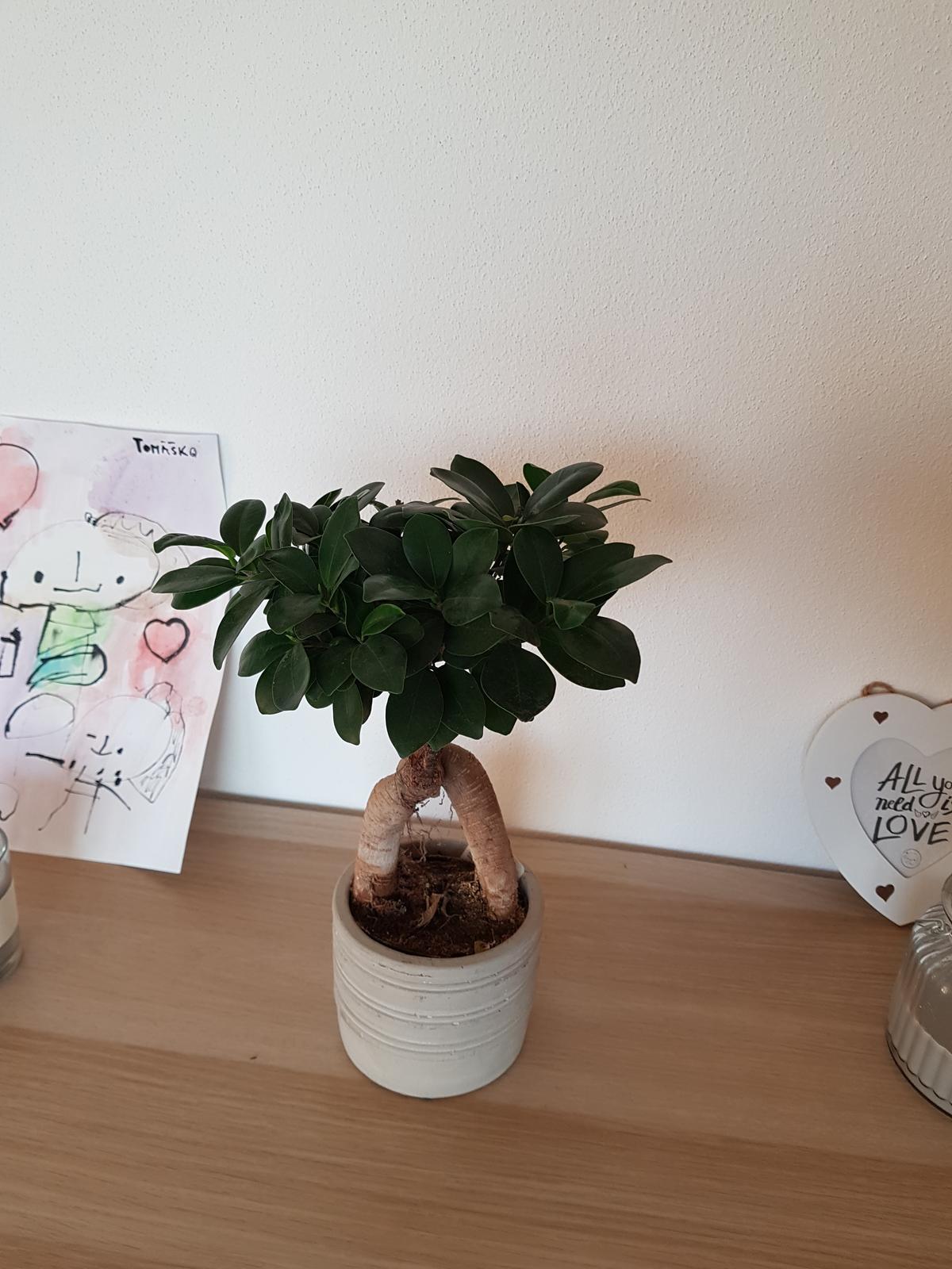 Moje krásne kvetinky - 2/2019