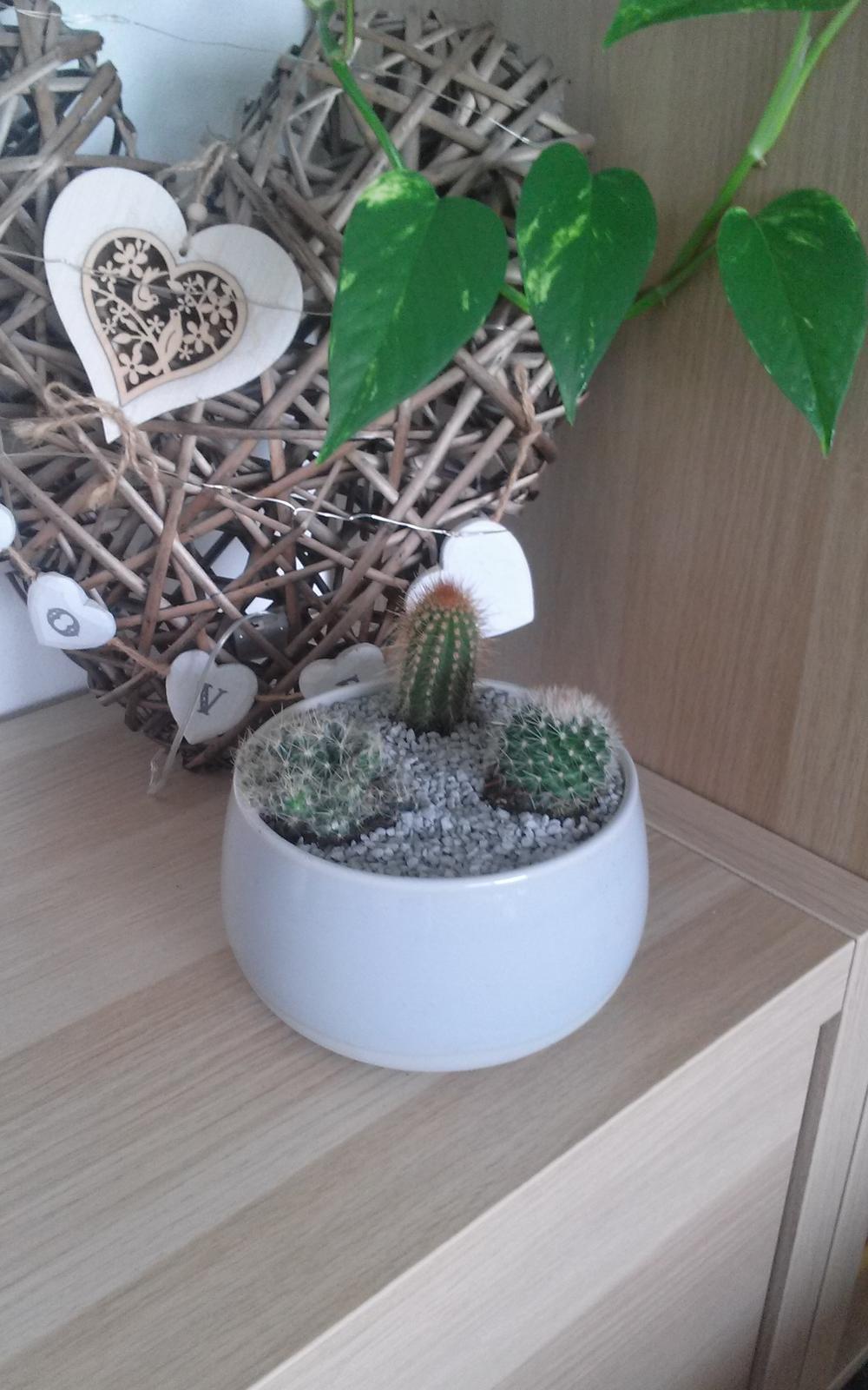 Moje krásne kvetinky - Kaktusiky 7/2019