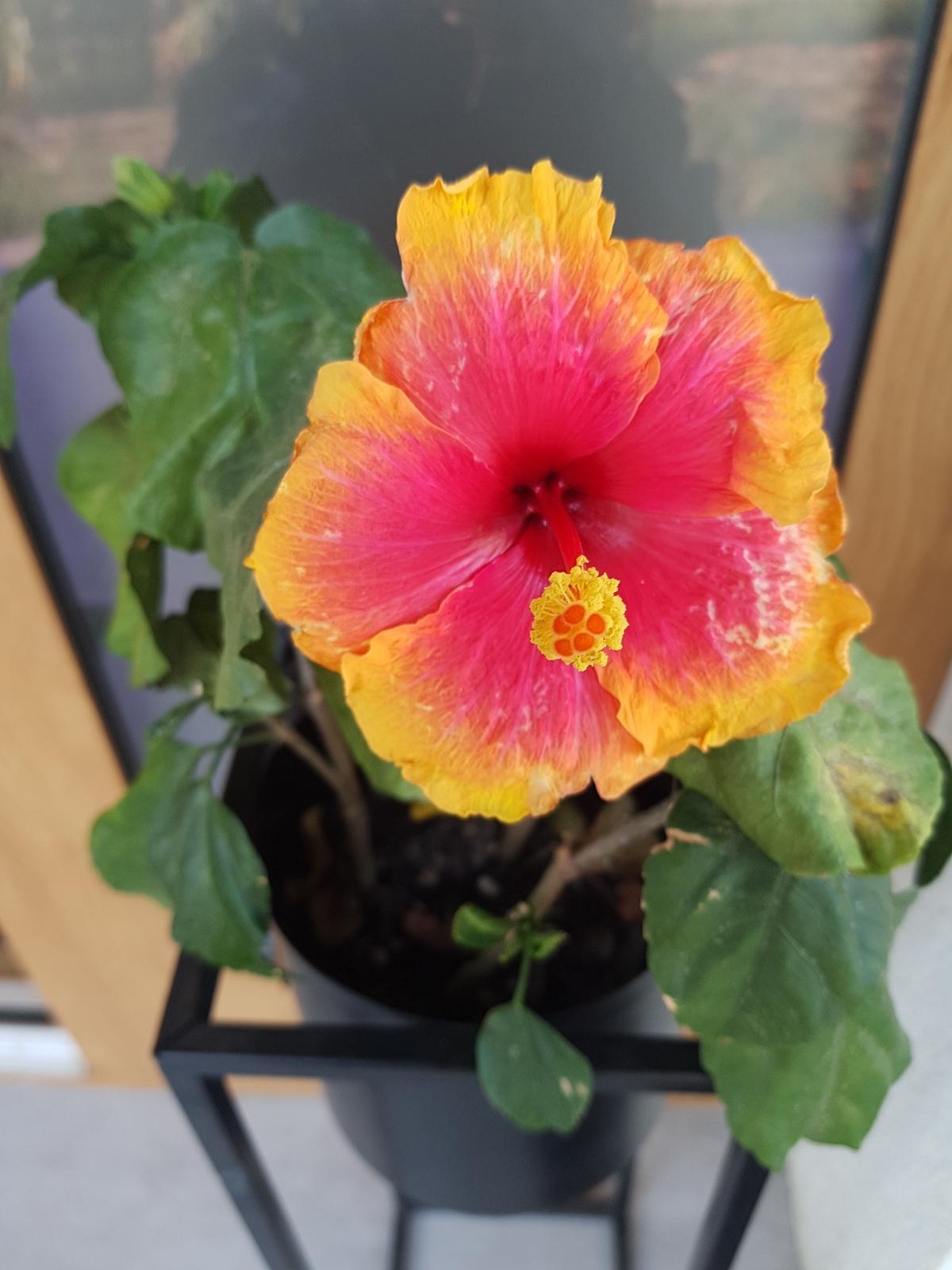 Moje krásne kvetinky - Obrázok č. 162