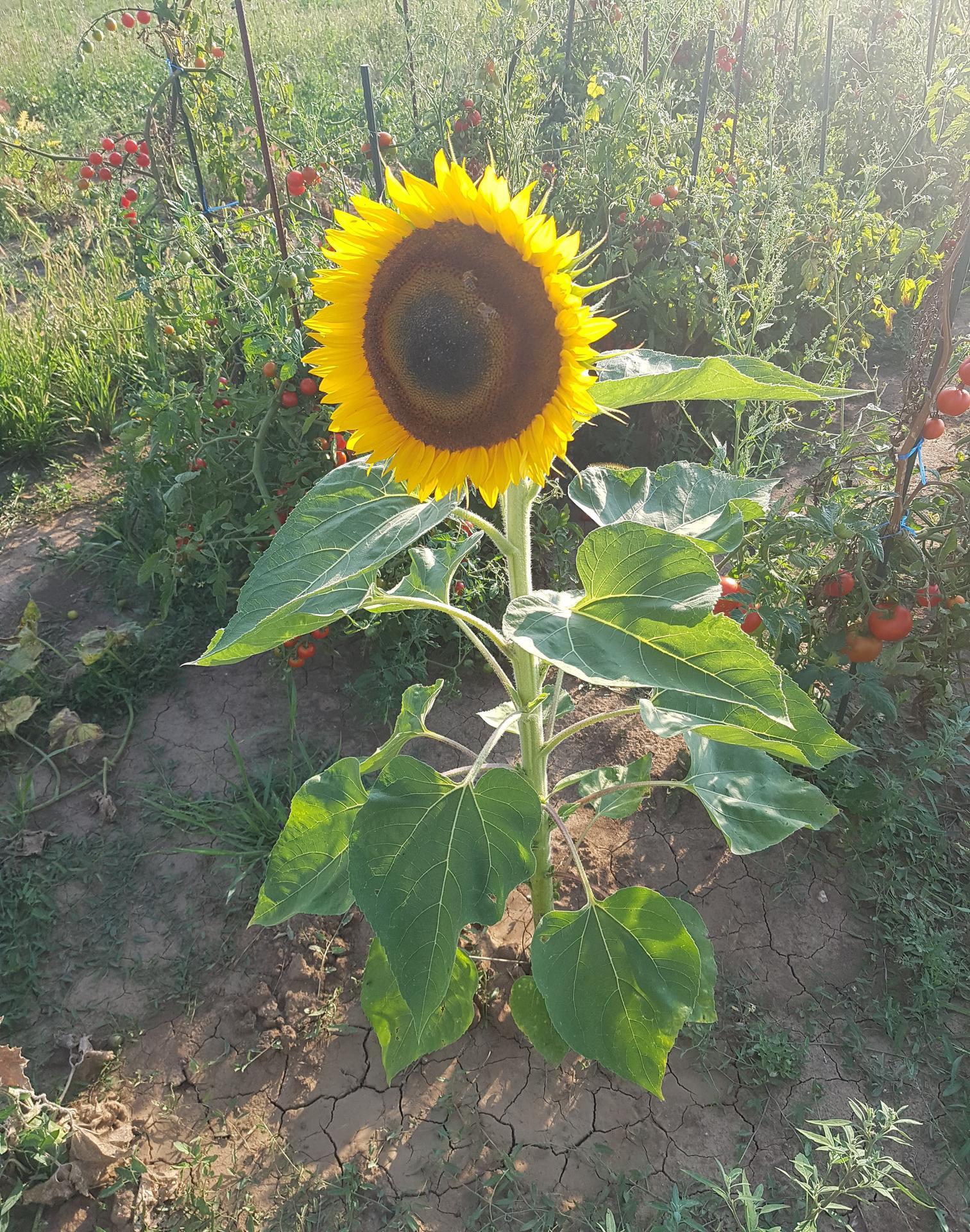Moj rok v zahrade - Obrázok č. 12