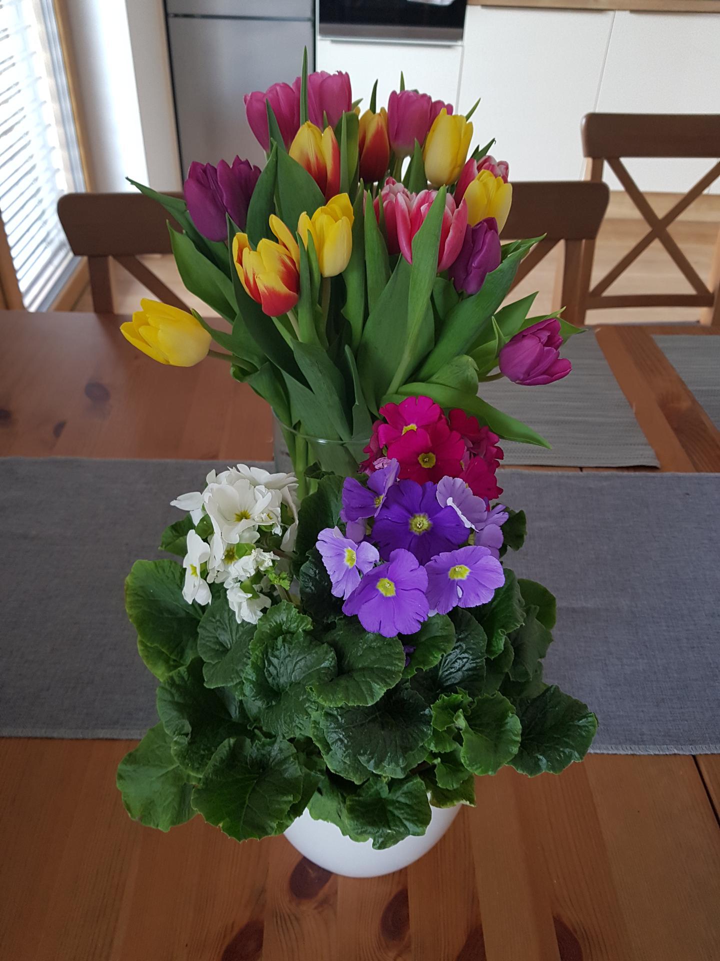 Moje krásne kvetinky - Prvosienka kaliskata 2/2020