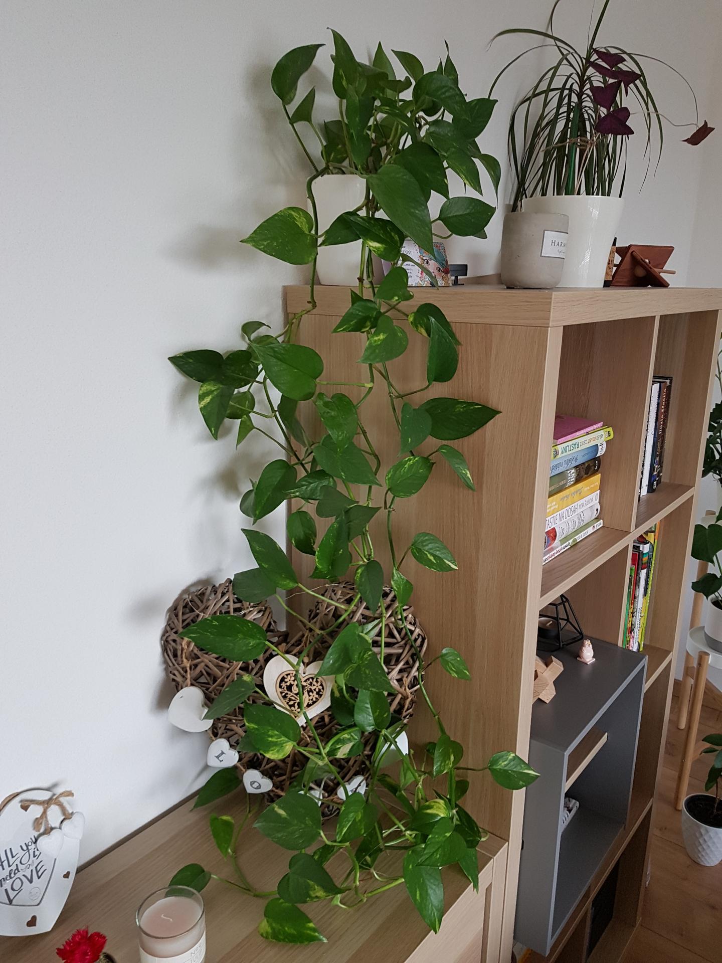 Moje krásne kvetinky - potosovec 2/2020