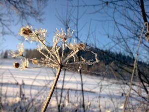 Zimní čarování