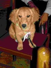 náš pes Nikita